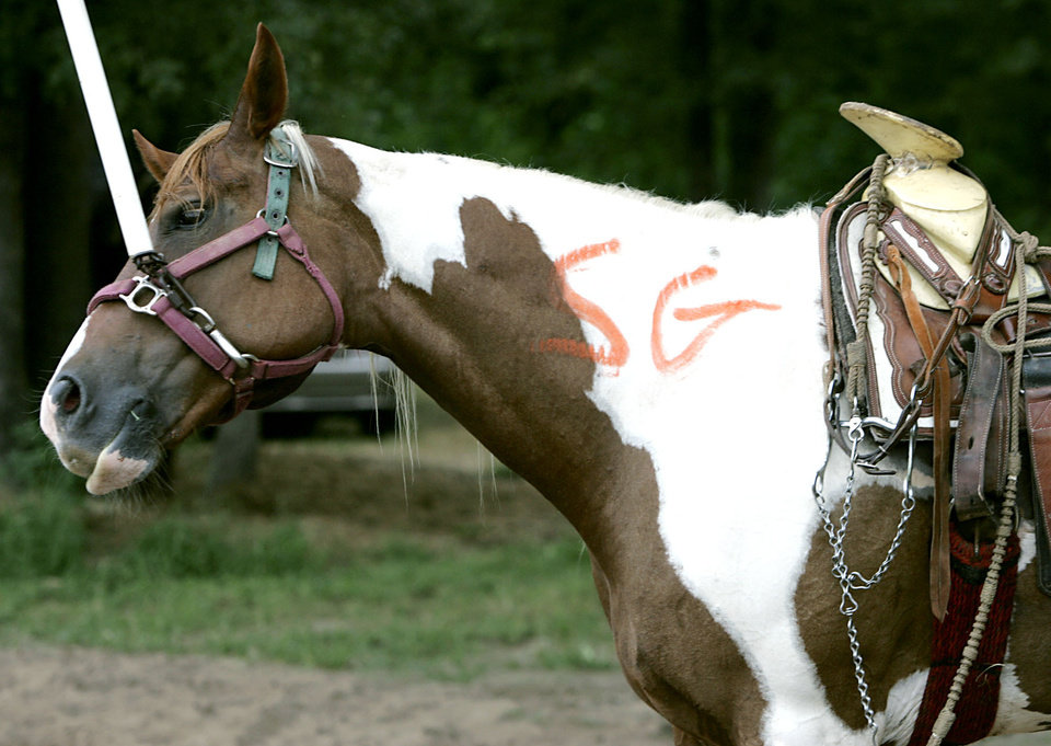 Photo - A horse bears markings from state officials after they inspected the animal following a raid on a suspected illegal horse racing operation near Thackerville, OK., on Sunday, July 29, 2007. By John Clanton, The Oklahoman