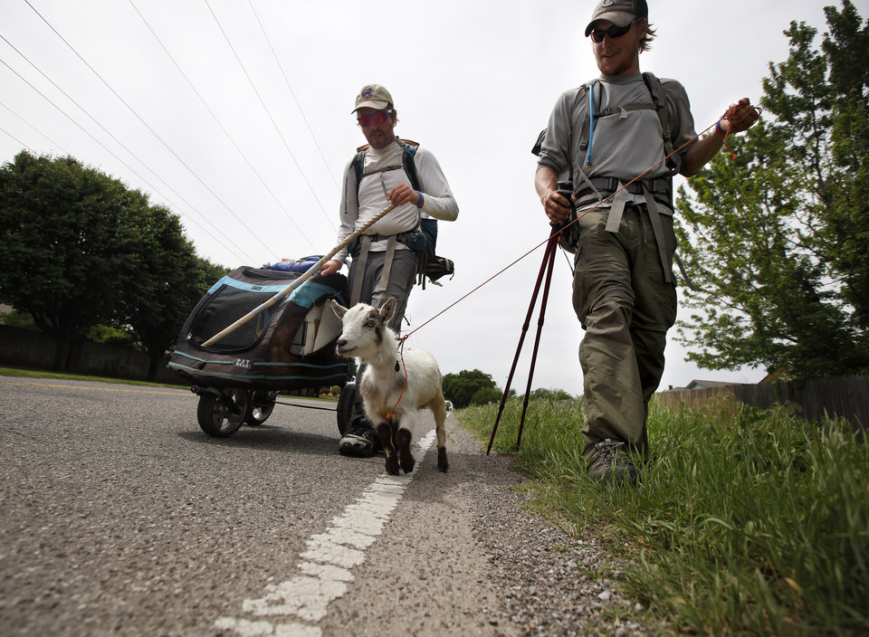 Photo - Matt Gregory, left, and Phillip Aldrich walk with Wrigley along Wilshire Boulevard in Oklahoma City,Thursday, April 19, 2012. The groups is walking with a a goat  to
