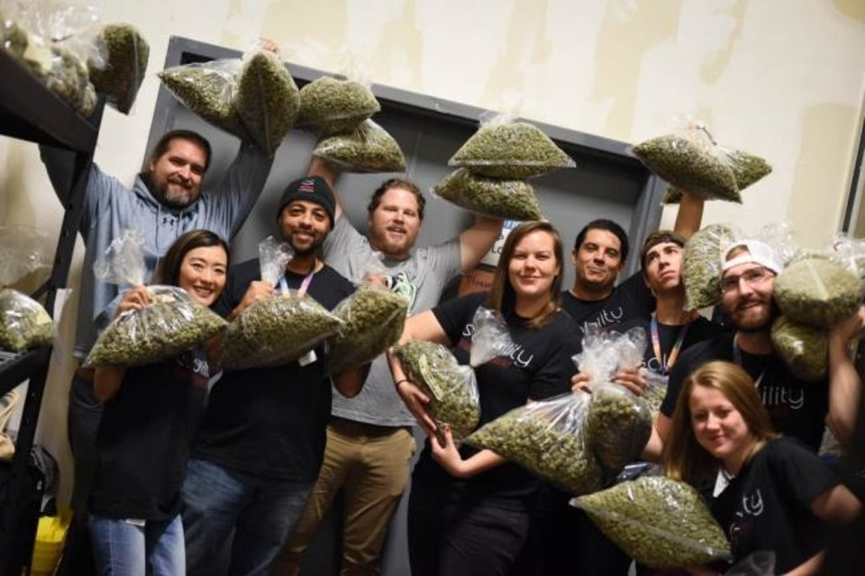 Photo -  Stability Growth employees hoist bags of flower headed for dispensaries across a dozen Oklahoma counties. [PROVIDED]