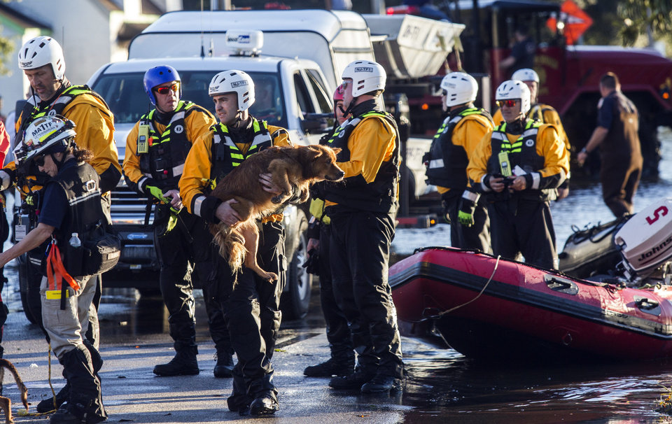 Photo - Rescue workers bring dogs to high ground that were found stranded in flood waters after Hurricane Matthew caused downed trees, power outages and massive flooding along the Lumber River Monday, Oct. 10, 2016 in Lumberton, NC. (Travis Long/The News & Observer via AP)
