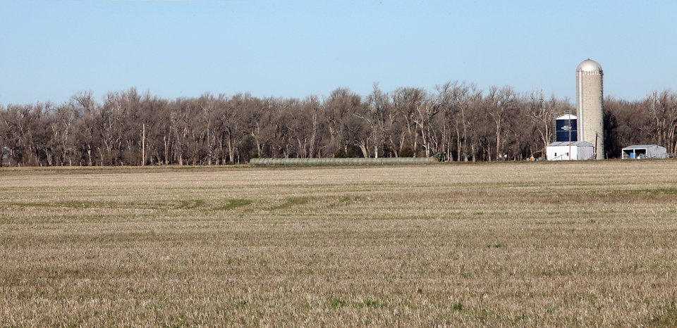 Photo - Shelterbelts near to Jimmy Piercey's farm near Dill City.   David McDaniel - The Oklahoman