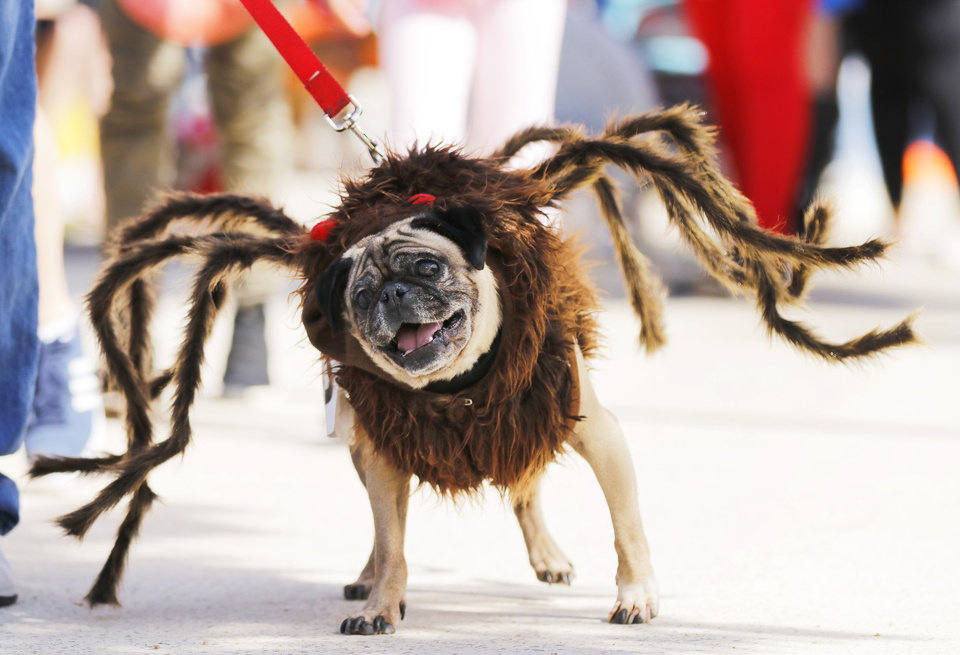 Dogs get dressed up during Spooky Pooch Parade - Photo Gallery