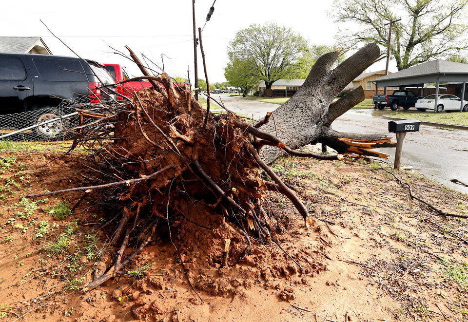 Photo - Large trees were split and some toppled as a result of damage from Wednesday's storms as seen on Thursday, May 3, 2018 in Purcell, Okla..  Photo by Steve Sisney, The Oklahoman