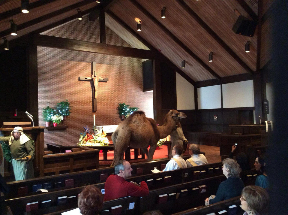 Photo - A camel is led through the sanctuary during a recent Epiphany service at St. Augustine of Canterbury Episcopal Church in Oklahoma City. Photo provided