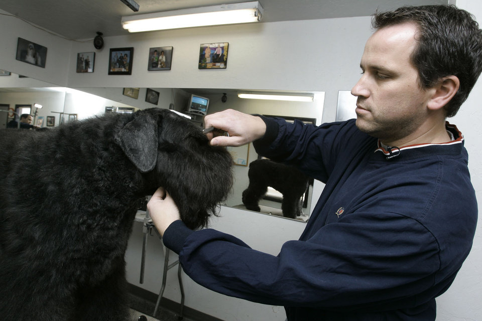 how to become a dog handler uk
