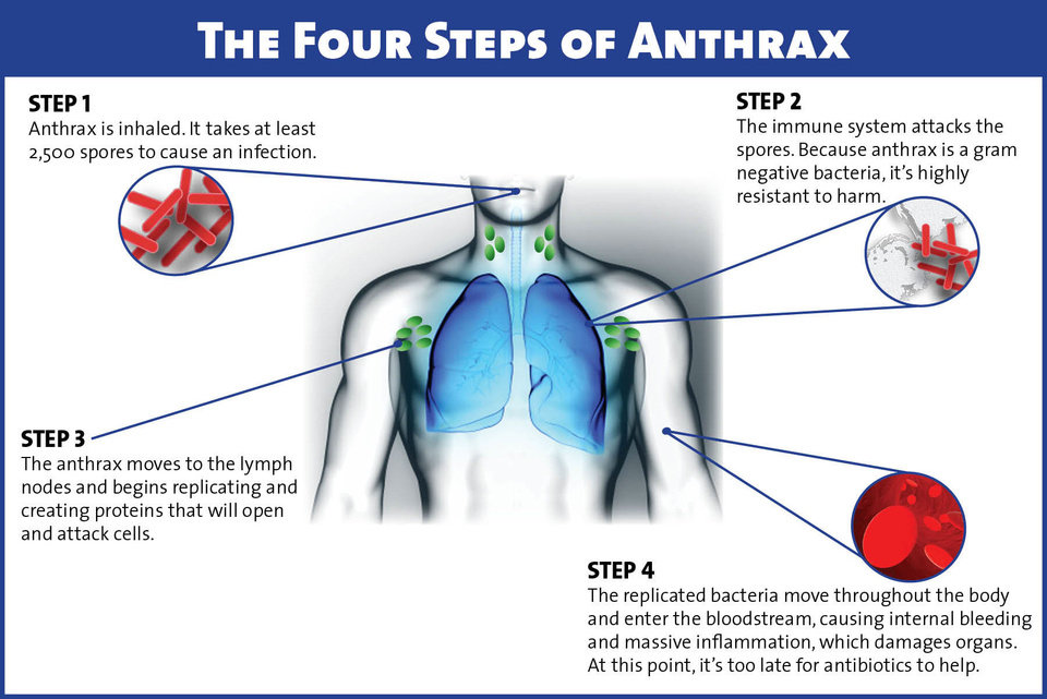 infectious disease research paper anthrax