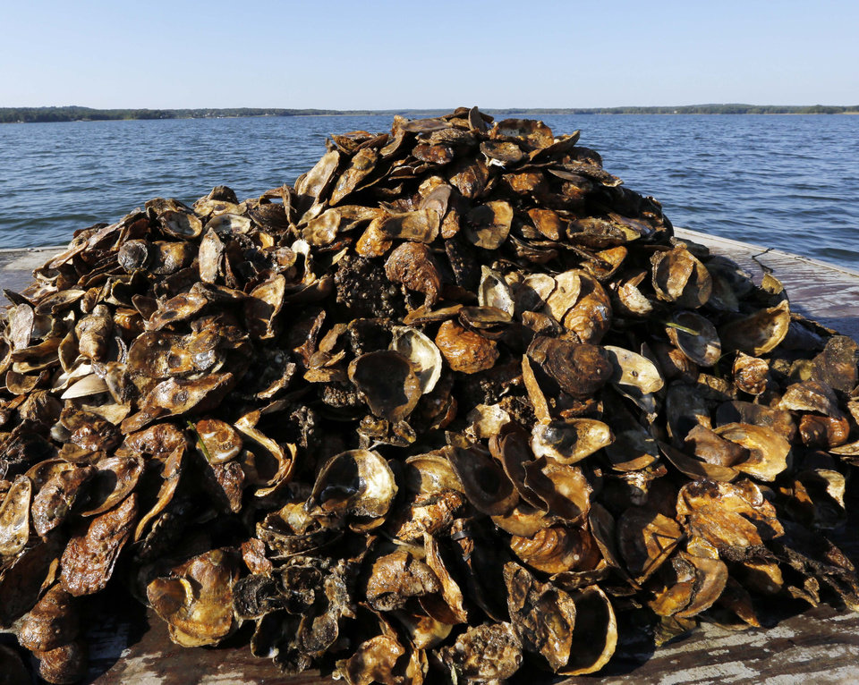 Natural Oyster Reef New Hampshire oyster p...
