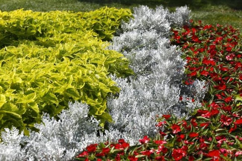 Photo -  Coleus, dusty miller, and impatiens peacefully coexist at Myriad Botanical Gardens. [JIM BECKEL/THE OKLAHOMAN]