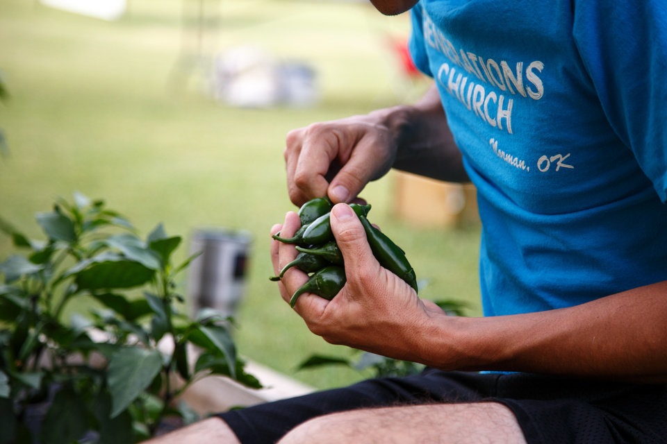Photo -  The Rev. Dustin Sells, senior pastor at Norman's Generations Church, picks jalapenos at the church community garden at 1433 W Boyd in Norman. [Photo by Anya Magnuson, The Oklahoman]