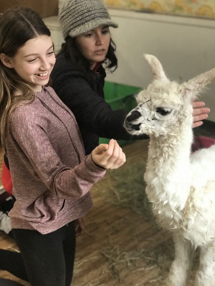 Photo -  Audra Duhon, left, and Erica Bollinger greet the new baby llama. [PHOTO PROVIDED]