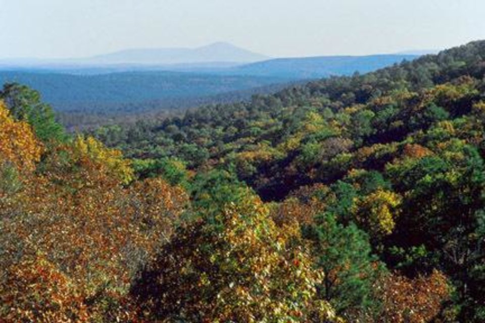 Photo - The Ouachita National Forest provides fall cover along the 54-mile Talimena Scenic Drive. (PHOTO PROVIDED)
