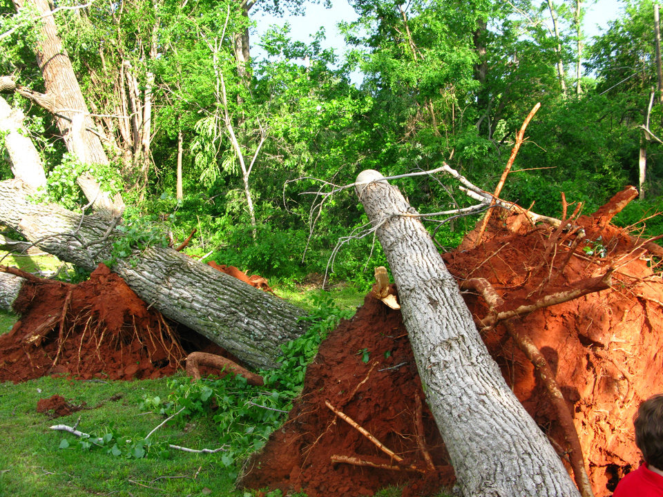 Photo - Storm damage uprooted decades-old trees in the Hidden Valley addition in southeast Edmond. Photo by Lillie-Beth Brinkman, The Oklahoman
