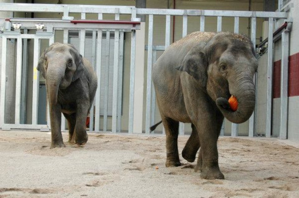 Newsok Camera Gives Behind The Scenes Look At Oklahoma City Zoo