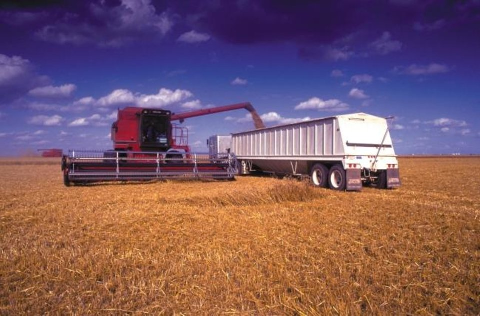 Photo -  A combine unloads harvested wheat into a trailer. Oklahoma exported $74 million worth of oilseeds and grains to Mexico and Canada in 2018. [PROVIDED BY OKLAHOMA STATE UNIVERSITY]