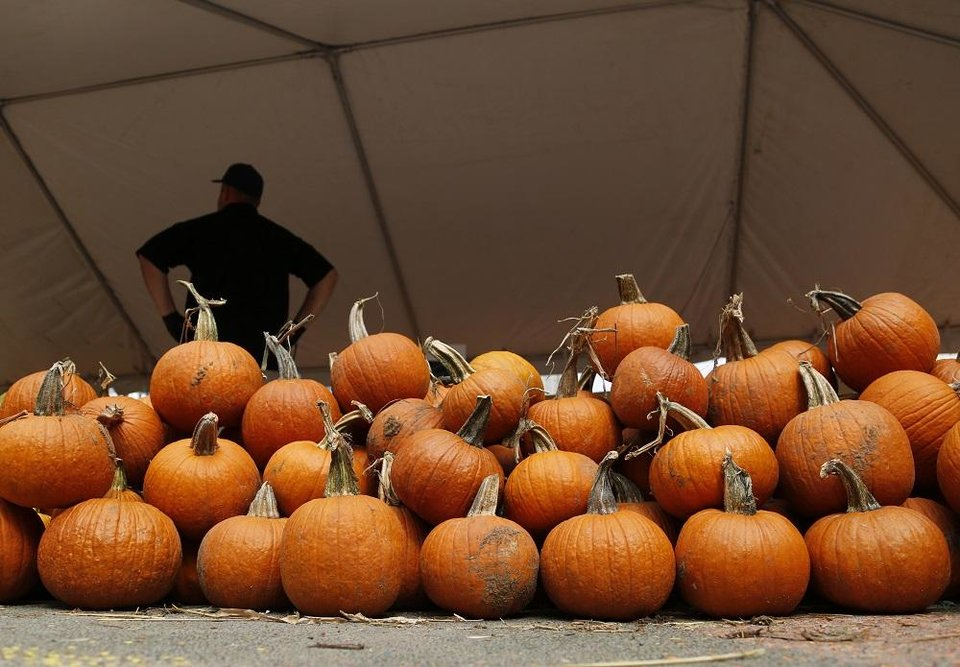 Photo - Piles of pumpkins sit in the sale tent for Pumpkinville in the Children's Garden at the Myriad Botanical Gardens. [Doug Hoke/The Oklahoman]