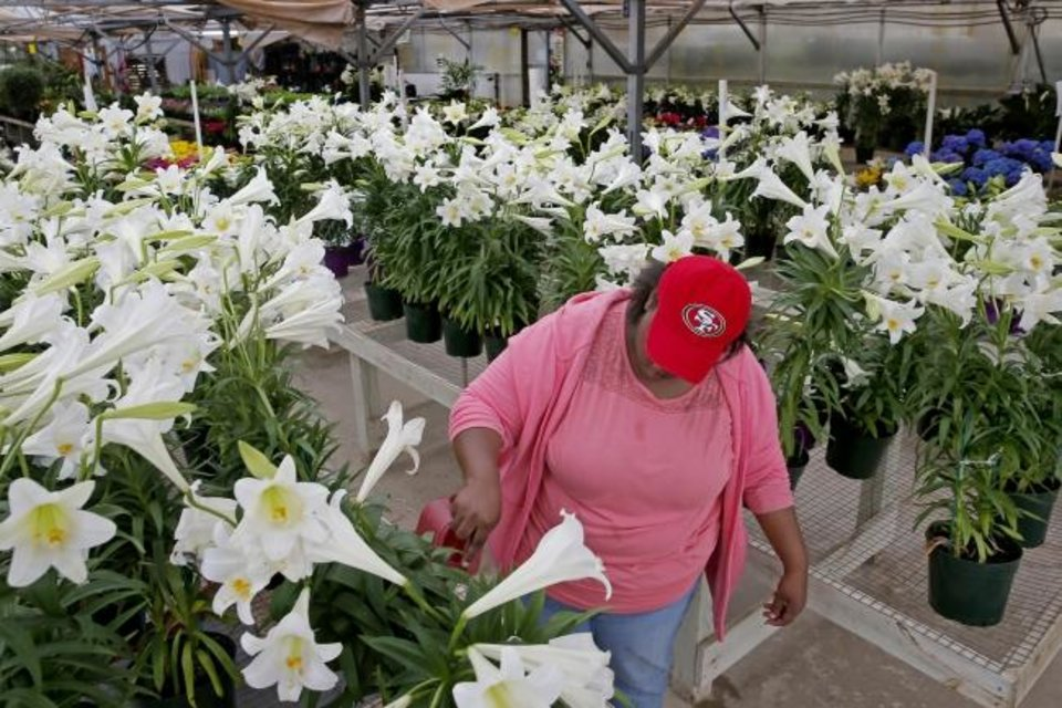 Photo -  Shay S. cares for Easter lilies in Okarche. [Bryan Terry/The Oklahoman]