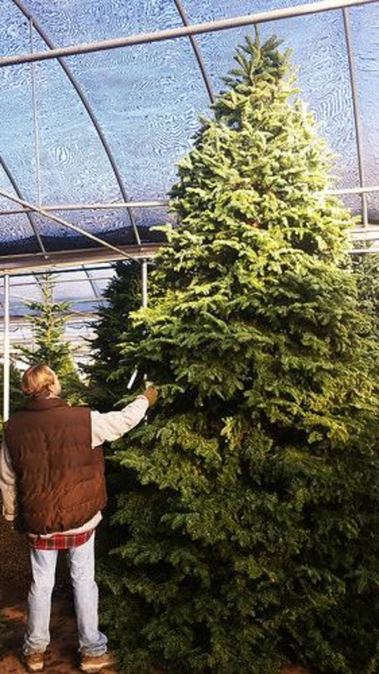 Keeping Christmas Trees Fresh