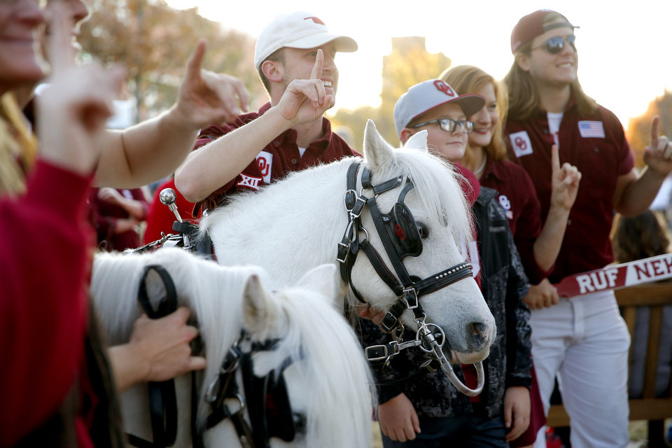 Photo - Fans pose with ponies Boomer and Sooner in front of the Sooner Schooner before an NCAA football game between the University of Oklahoma Sooners (OU) and the Iowa State University Cyclones at Gaylord Family-Oklahoma Memorial Stadium in Norman, Okla., Saturday, Nov. 9, 2019. [Bryan Terry/The Oklahoman]