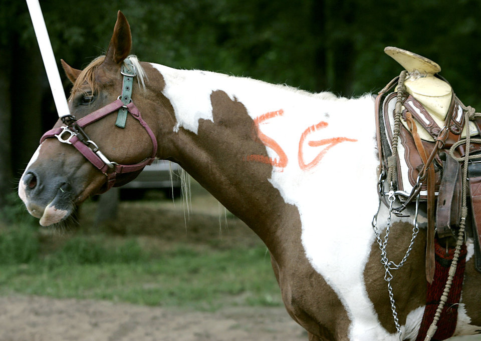 Photo - RED RIVER PLAYGROUNDS: A horse bears markings from state officials after they inspected the animal following a raid on a suspected illegal horse racing operation near Thackerville, OK., on Sunday, July 29, 2007. By John Clanton, The Oklahoman ORG XMIT: KOD