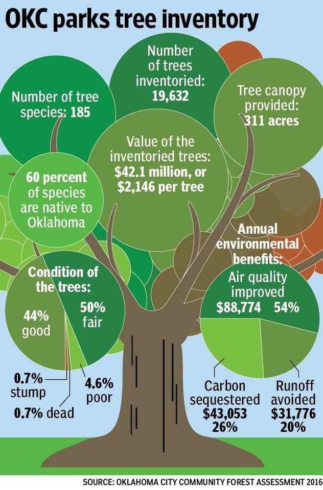 Five Of The Most Common Trees In Oklahoma City Parks