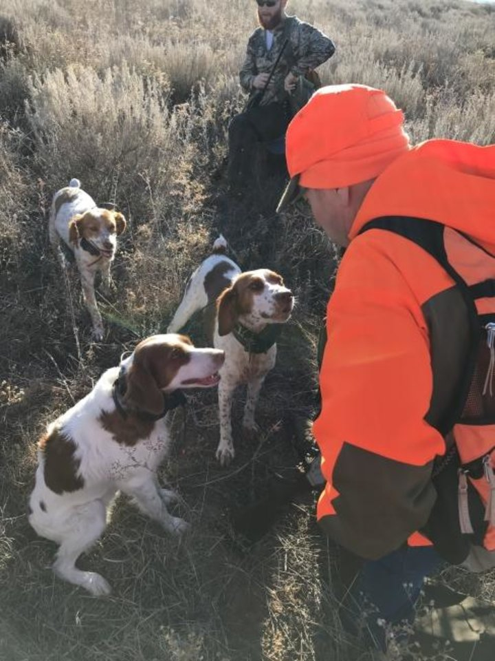 Photo -  James Dietsch of Oklahoma City offers water to three Brittanys — Liberty, Annie and Sadie — during a break from quail hunting on Saturday on the Beaver River Wildlife Management Area. Quail season opened Saturday statewide. [PHOTO BY LAURA MCIVER]