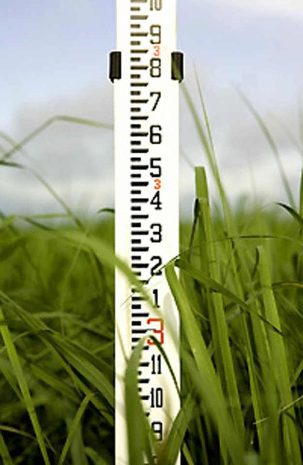 Photo -  A measuring stick keeps track of the height of a Noble Foundation switchgrass test crop. [Photo provided]
