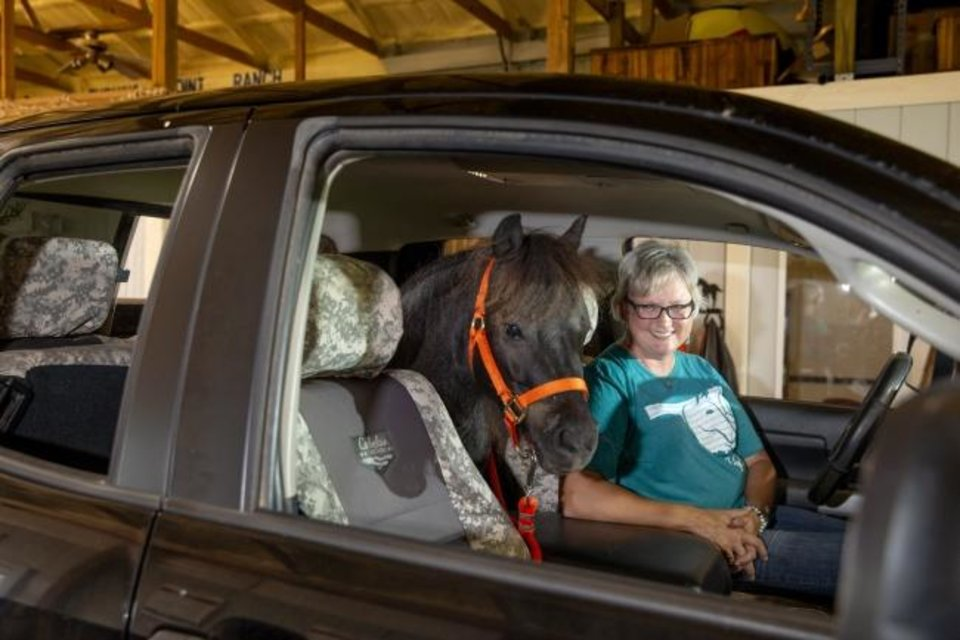 Photo -  Rachel Royston, sits in her truck Tuesday in Stillwater with BB, the miniature horse Oklahoma State has adopted as a mascot for gameday. [Bryan Terry/The Oklahoman]
