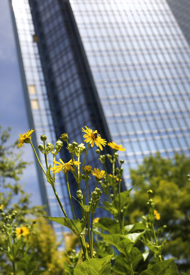 Photo - Cup plant. Myriad Botanical Gardens is an oasis of a myriad beautiful flowers, plants, trees and water displays surrounded by downtown streets and nestled among skyscrapers and office buildings. Photo taken July 11, 2019.  [Jim Beckel/The Oklahoman]