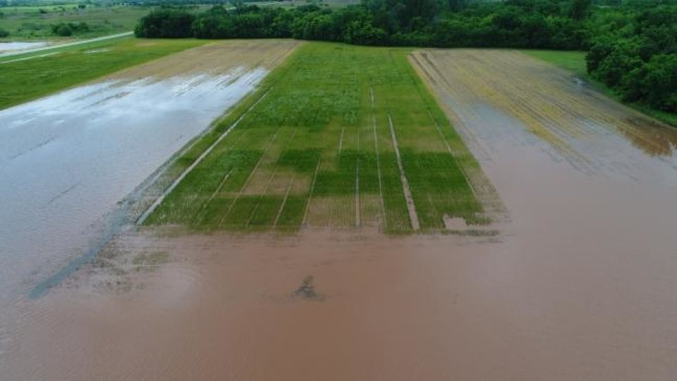 Photo -  Floodwaters cover a field of crops near Lake Carl Blackwell in Payne County last week. [BRIAN ARNALL/PROVIDED]