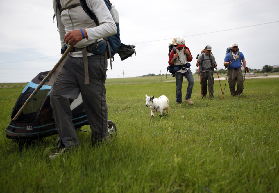 Photo - Matt Gregory, P.J. Fisher, Phillip Aldrich and Blake Ferrell walk with Wrigley along Wilshire Boulevard in Oklahoma City, Thursday, April 19, 2012. The groups is walking with a a goat  to