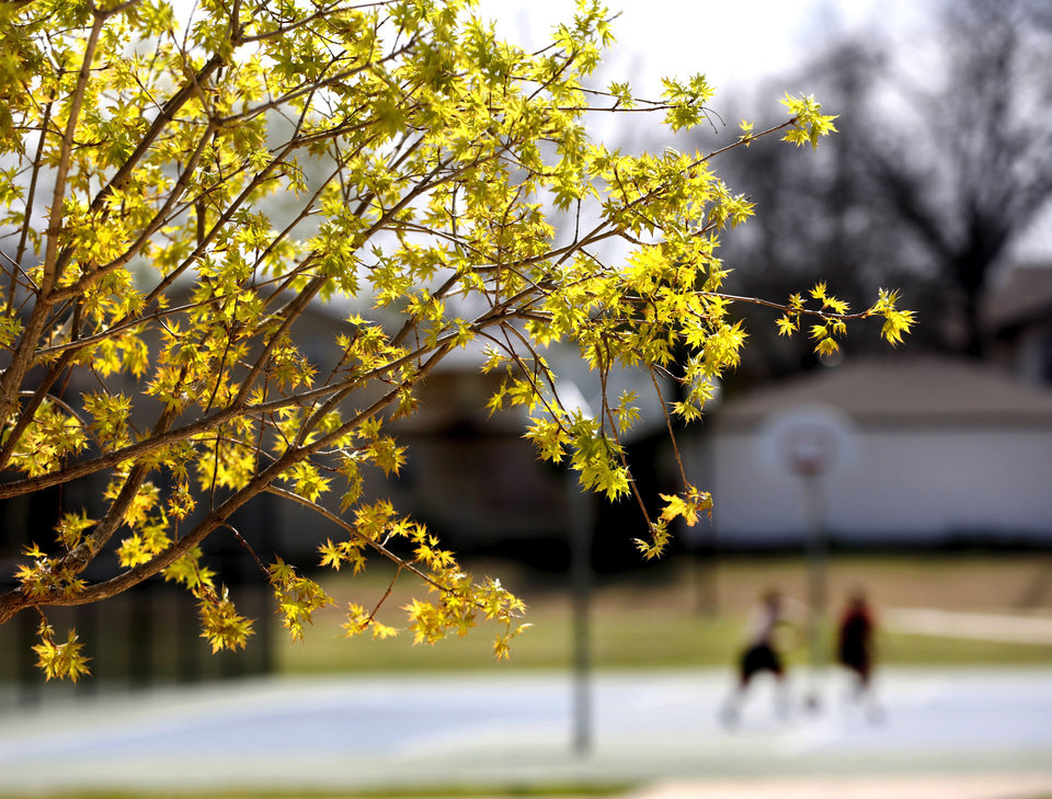 Photo -  Trees add beauty and color to Memorial Park on NW 36, between Classen Boulevard and Western Avenue. [Photo by Jim Beckel, The Oklahoman]