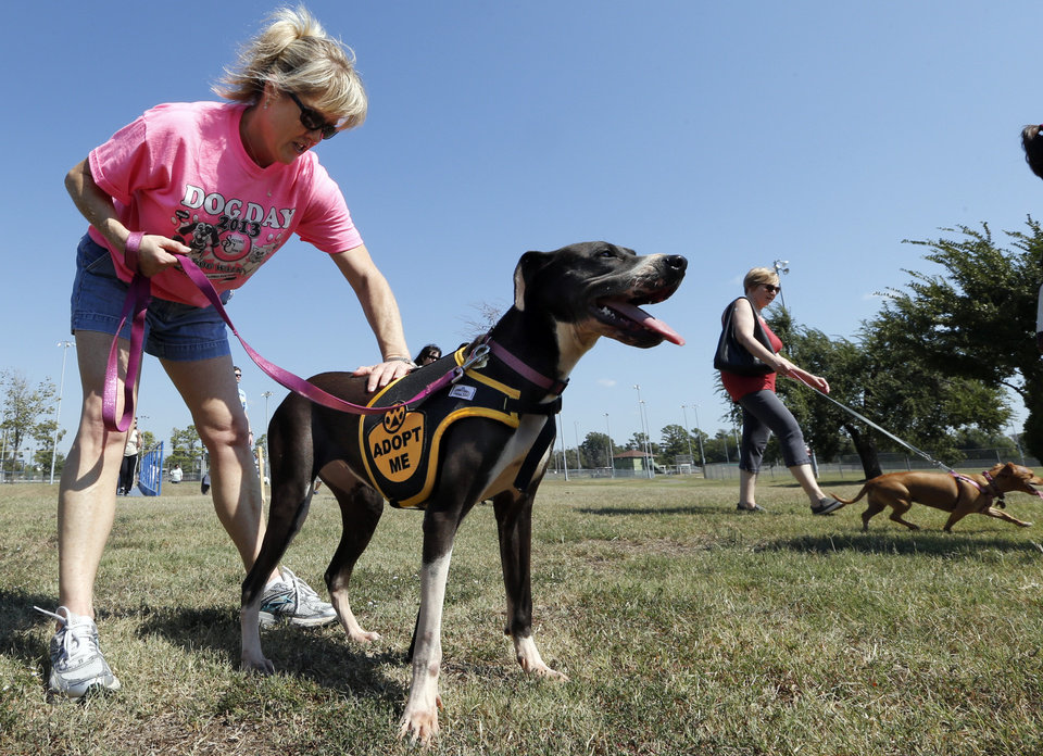 Photo -                    Volunteer Alice Dantzler walks LaToya in the inaugural Cindy Johnson Memorial Dog Walk during the annual Dog Day Afternoon event sponsored by Second Chance of Norman.                     PHOTOs BY STEVE SISNEY, THE OKLAHOMAN