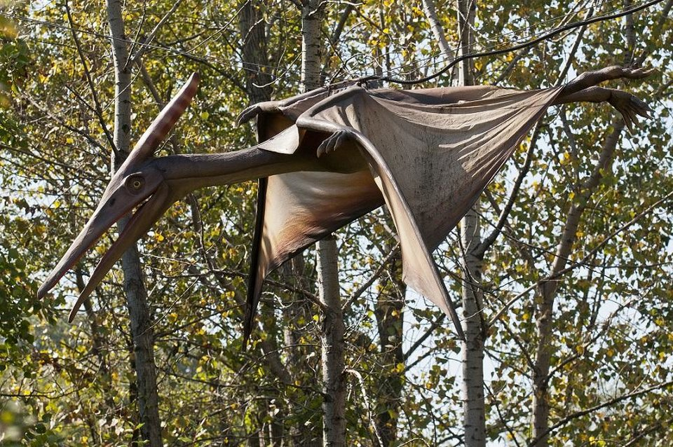 Photo - A life-sized, realistic Pteranodon is displayed at Field Station: Dinosaurs in Derby, Kansas. [Photo provided]