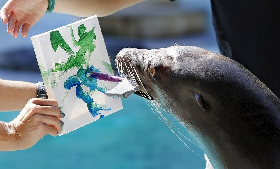 Photo - Jen Gaddy and Sierra Chappell hold the canvas as Piper, a California sea lion, applies paint using a brush she holds in her mouth to a create a painting Monday, Aug. 28, 2017, at the Oklahoma City Zoo. Many zoo animals created paintings as part of their enrichment activities, and the zoo sells the paintings through its annual