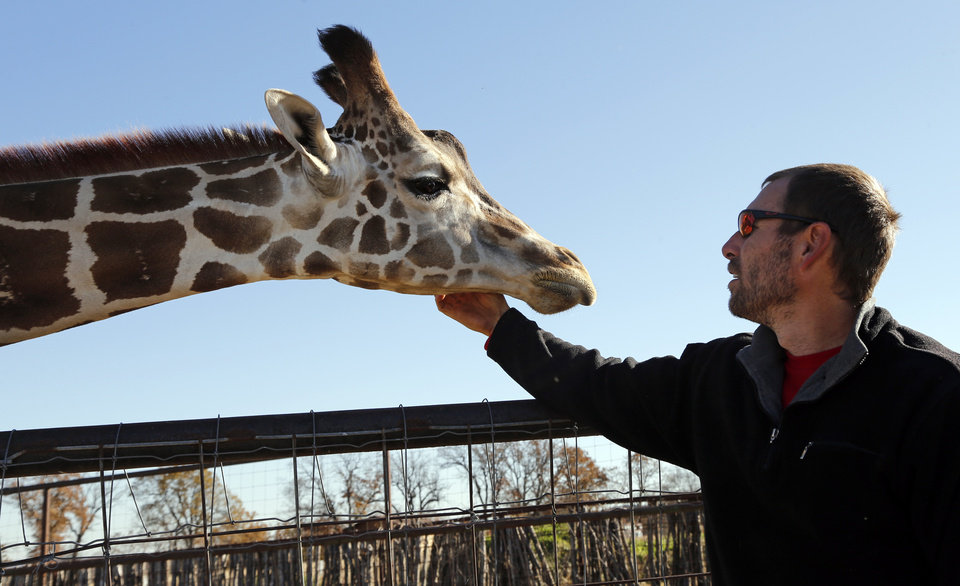 Photo -  Animal curator Jeremy Hinkle is greeted by a reticulated giraffe at Arbuckle Wilderness Park. [Photo by Steve Sisney, The Oklahoman]