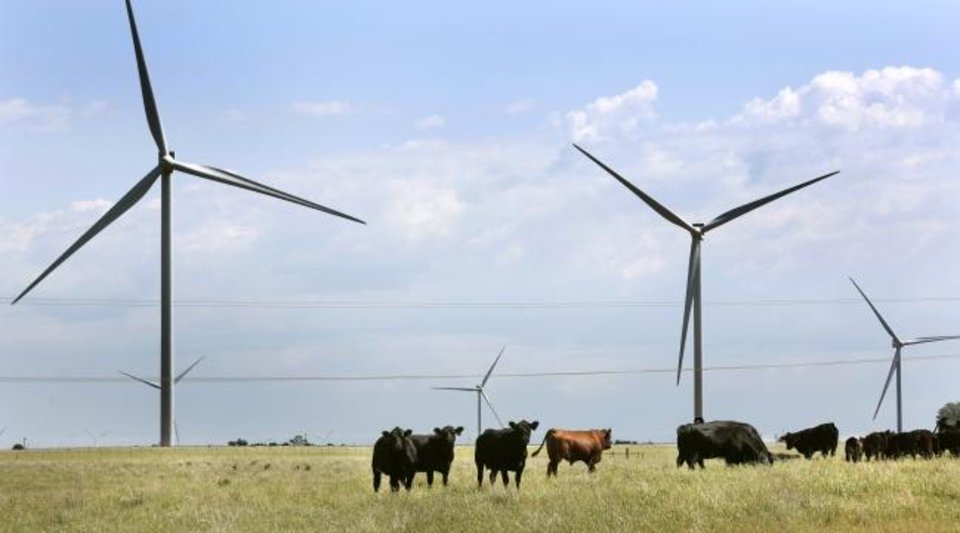 Photo -  Cattle graze on farm land in Kay County beneath wind turbines. Mexico and other countries are important trading markets for beef products raised in Oklahoma. [OKLAHOMAN ARCHIVES]