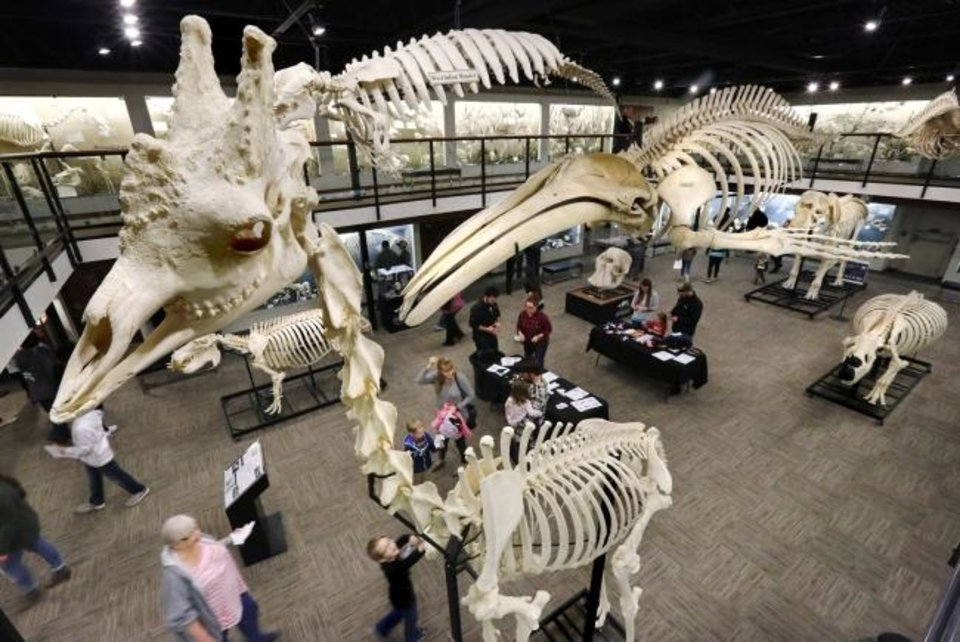 Photo -  Visitors look at skeletons of all sizes and species inside the Museum of Osteology, 10301 S. Sunnylane, in southeast Oklahoma City in 2017.  In foreground is a giraffe skeleton. [The Oklahoman Archives]