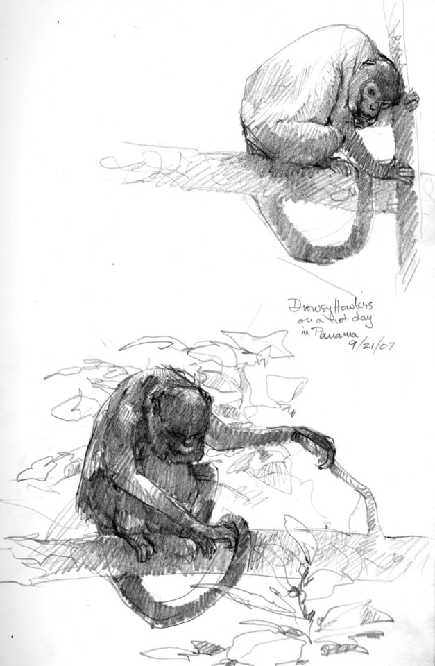 Photo - A drowsy howler monkey sketched by Debby Kaspari.PHOTO PROVIDED