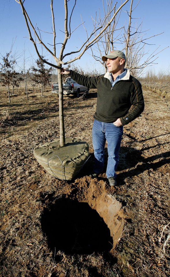 Photo - Monty Marcum, Marcum's Nursery & Tree Farm, with a Chinese Pistache being dug up for sale at Marcum's Nursery & Tree Farm in Goldsby Monday, Jan. 14, 2008. BY PAUL B. SOUTHERLAND, THE OKLAHOMAN ORG XMIT: KOD