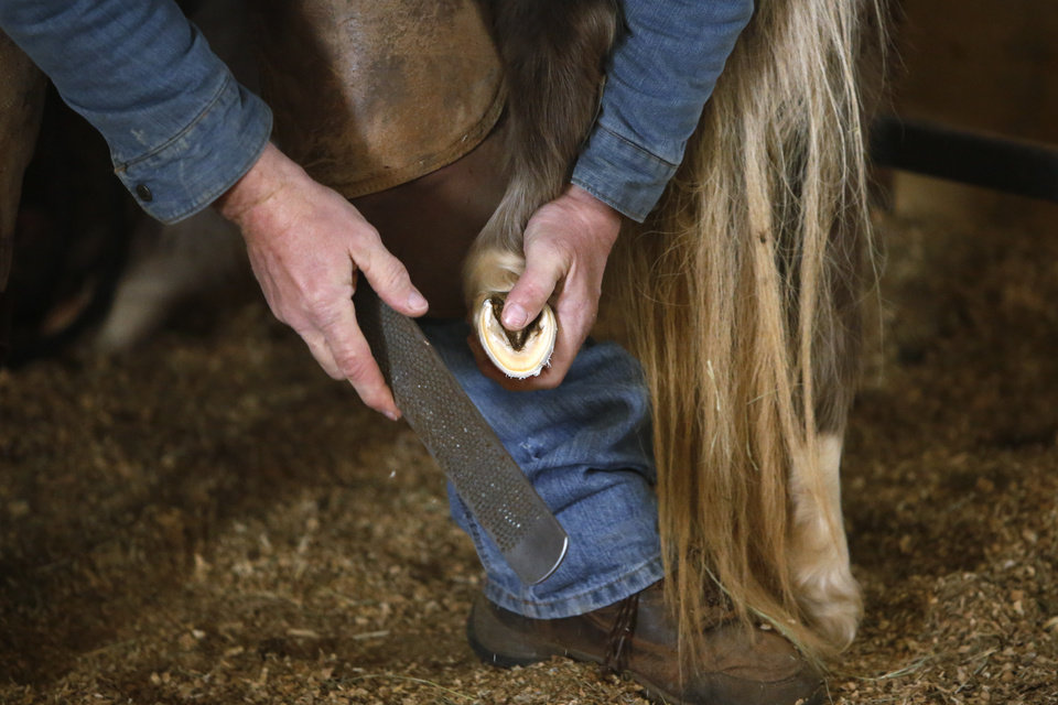 Photo -  Farrier Terry Kallenberger trims and files the hoof of a newly acquired miniature horse at Nexus Equine in Edmond.