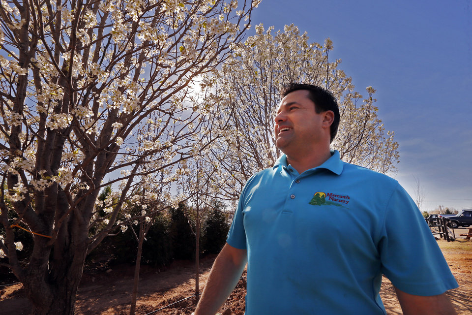 Photo -  Shane Scott at Marcum's Nursery in Oklahoma City talks Wednesday about Bradford pear trees. [Photo by Steve Sisney, The Oklahoman]