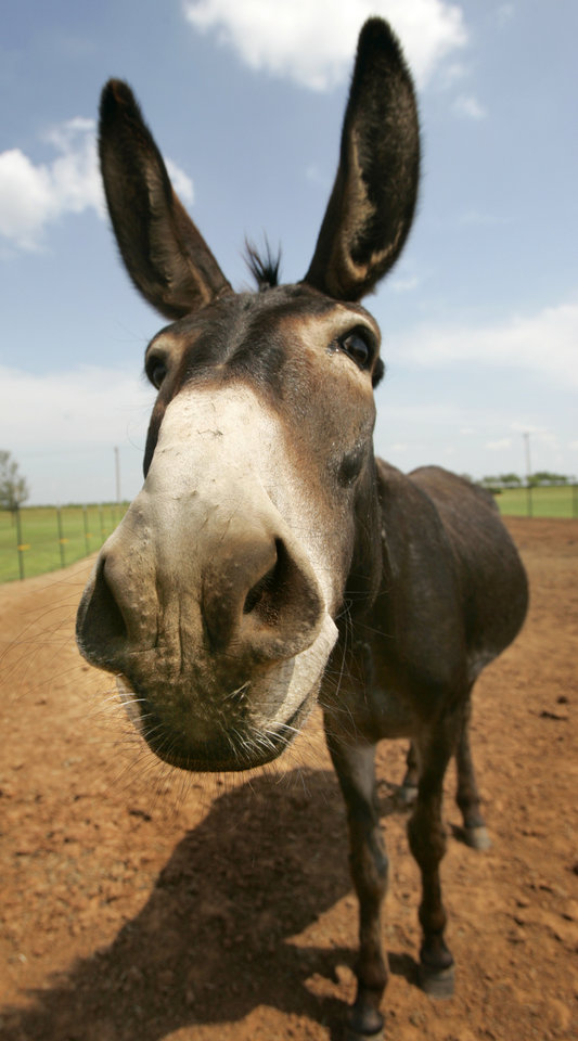 Piedmont donkey rescue operation moves to Texas - Article Photos