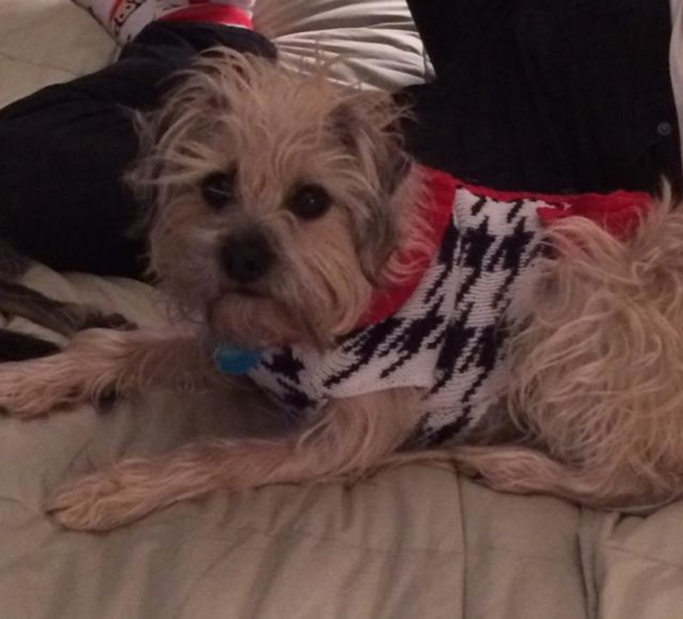 Photo - Jimmy is ready for winter in his new sweater. by John Gullo #newsoknow #Life
