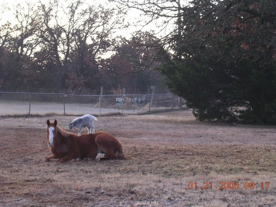 My Edmond User Submitted Photos - Photo Gallery