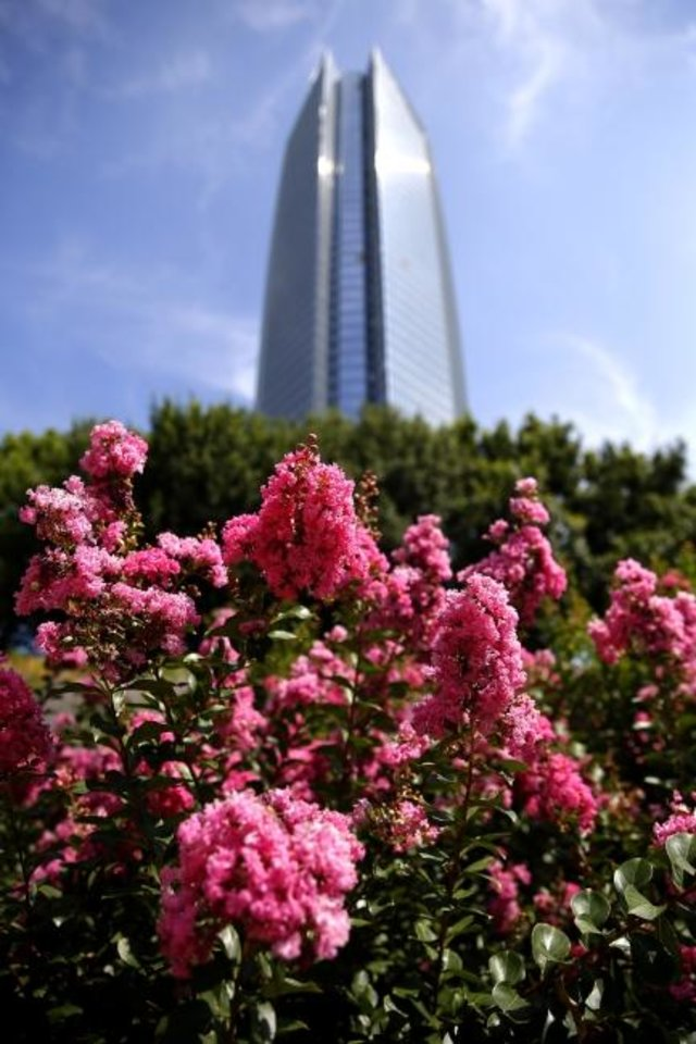 Photo -  Devon Tower appears to soar over a crape myrtle at Myriad Botanical Gardens. [SARAH PHIPPS/THE OKLAHOMAN]