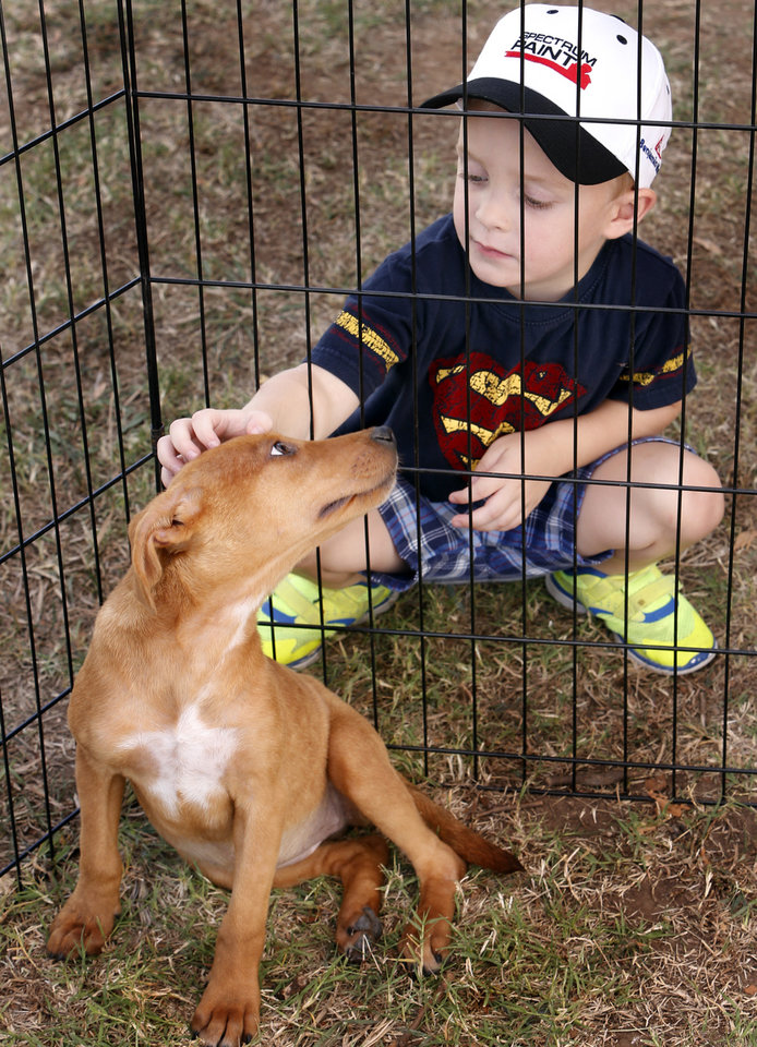 Photo -                    Dallas Brumley, 3, checks out — and is checked out by — a female hound available for adoption.