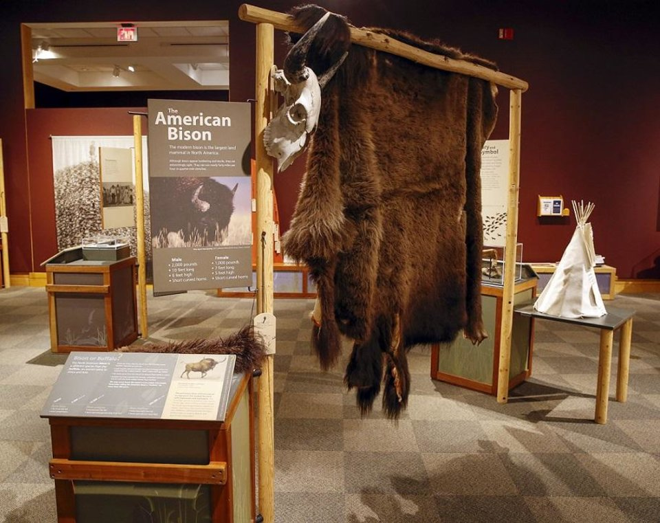 "Photo - Touch items like a bison hide are included in ""Ancient. Massive. Wild – The Bison Exhibit"" at the National Cowboy & Western Heritage Museum in Oklahoma City, Thursday, Feb. 7, 2019. [Photo by Nate Billings/The Oklahoman]"