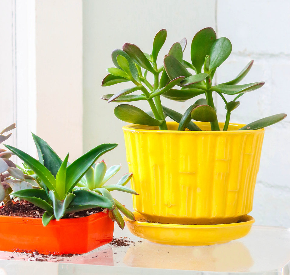 Photo -  Learn about Indoor Gardening with Houseplants at Wednesday at Will. [Metro Creative Connection]