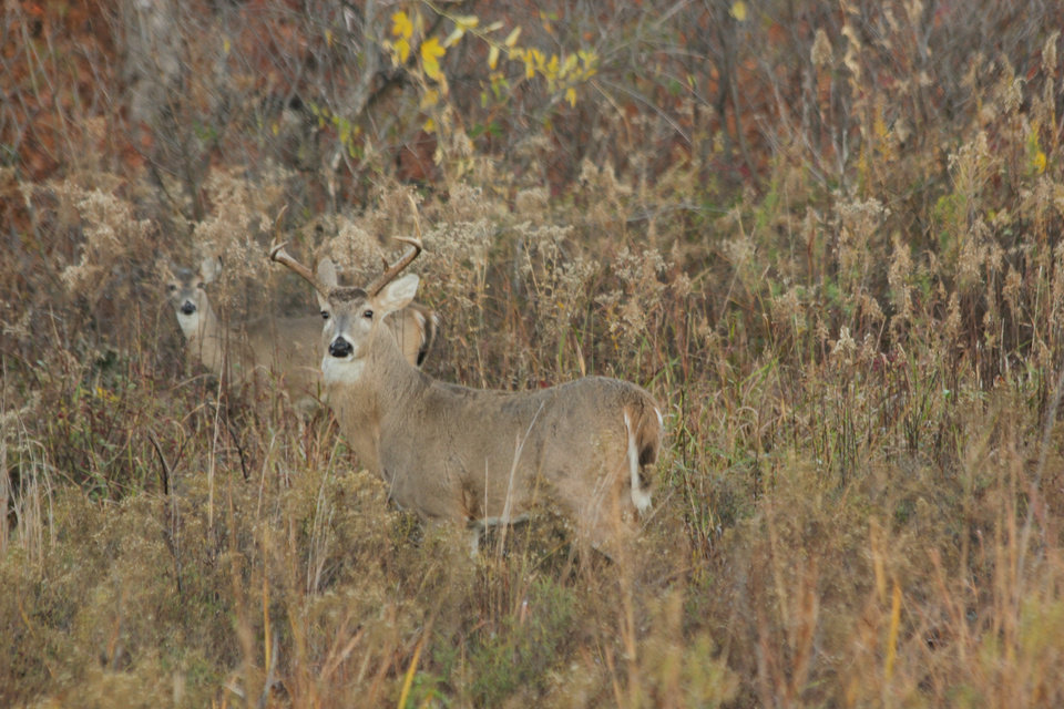 Photo -  Oklahoma's 16-day deer gun season, the most popular hunting season in the state, opens Saturday. [PHOTO BY ALAN MCGUCKIN]