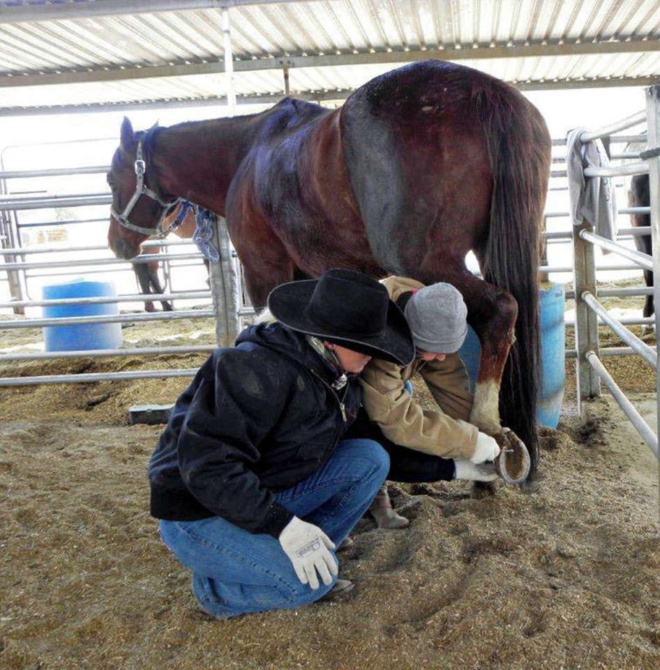 Photo - Elaine Pawlowski teaches a student to clean a horse's hooves at Arizona Cowboy College in Scottsdale. Photo courtesy of Victor Block.